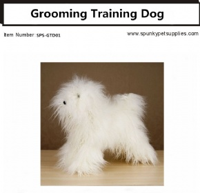 Grooming Training Dog